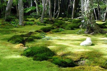 Moss garden at Gio-ji temple