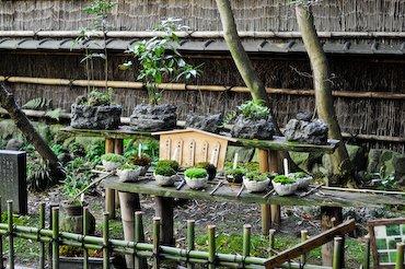 Jardin de mousse