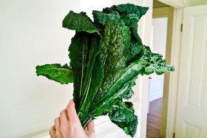 Recettes de kale