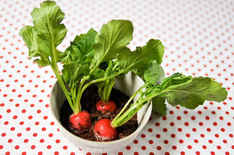 radis pleine terre la noma recette chocolate zucchini. Black Bedroom Furniture Sets. Home Design Ideas