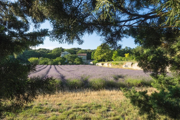 La ferme de Baume des Anges au sud de Montélimar.