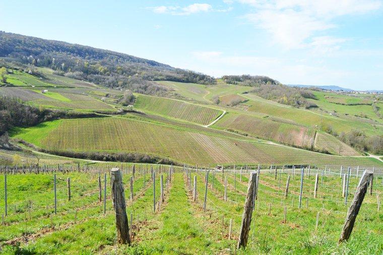 Pendant la seconde Guerre Mondiale, la ligne de démarcation passait en plein milieu des vignes du domaine Pupillin.
