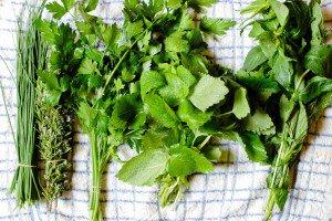 Fresh Greens