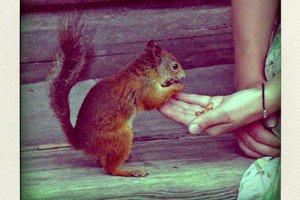ecureuil-pola