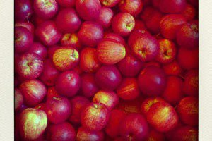 pommes-pola