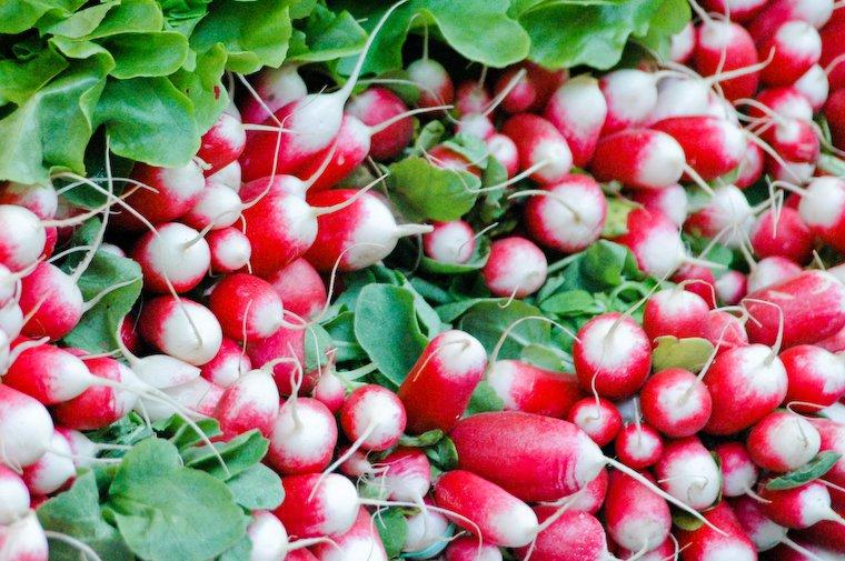 Pink radishes