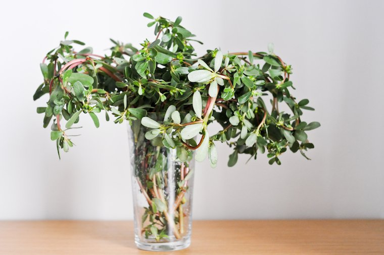 Purslane Recipes