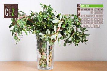 October Desktop Calendar from Chocolate & Zucchini