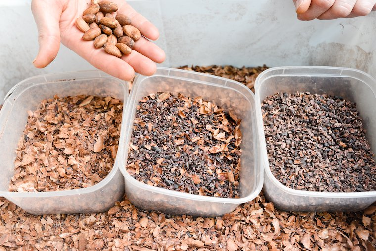 Cacao beans (top), cacao husks (left), cacao nibs (right), cacao nibs and husks (middle).