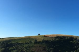 Lone hilltop tree